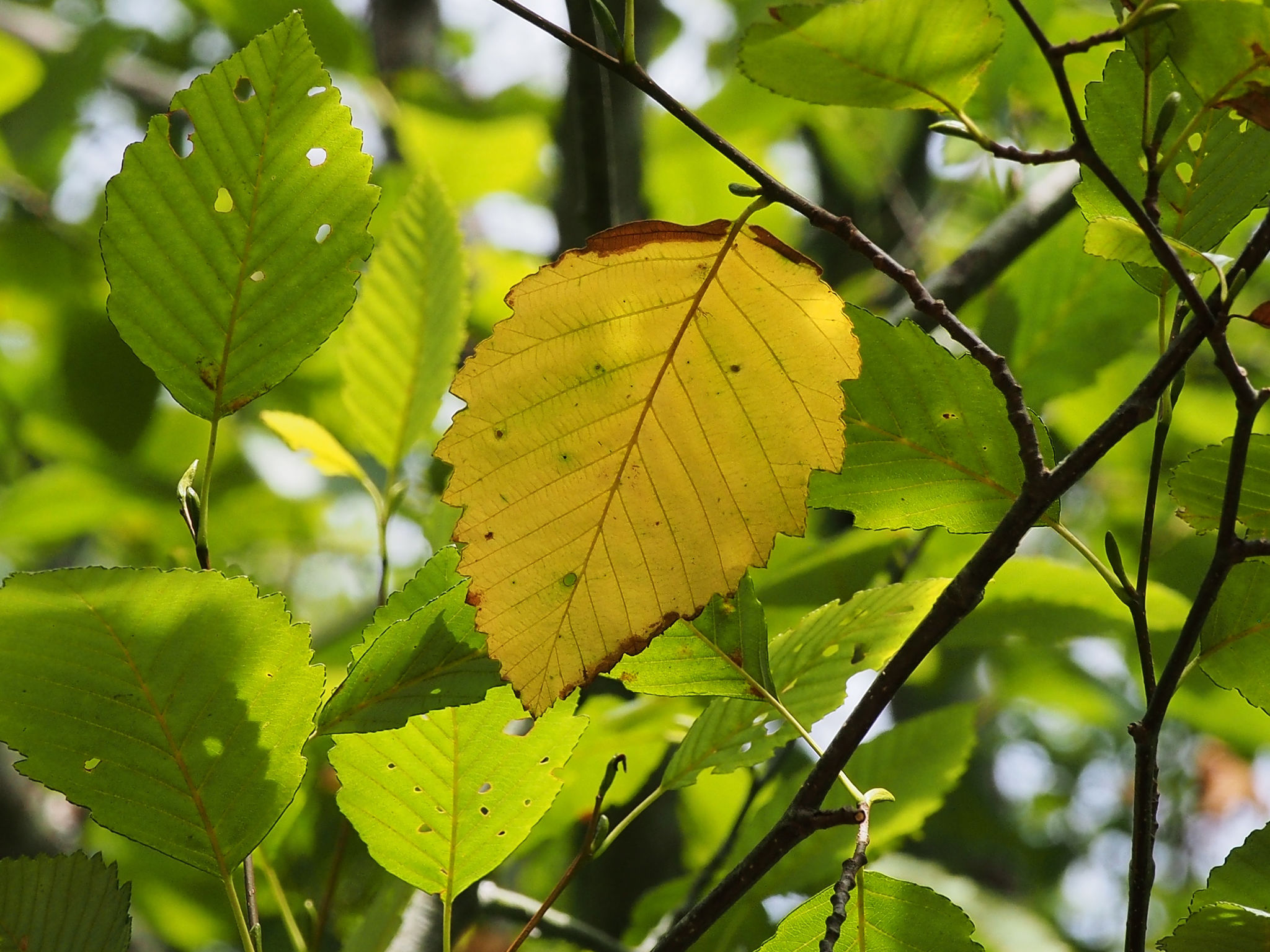 When the Leaf Falls – Nature\'s Depths