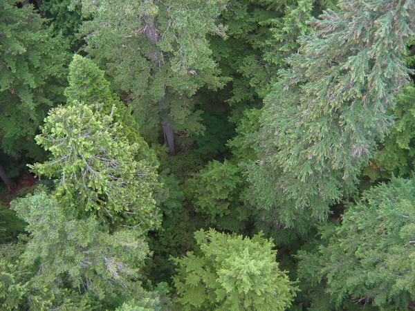 Canopy Crane View 350