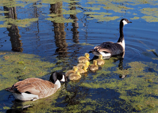 Young family heads out to feed