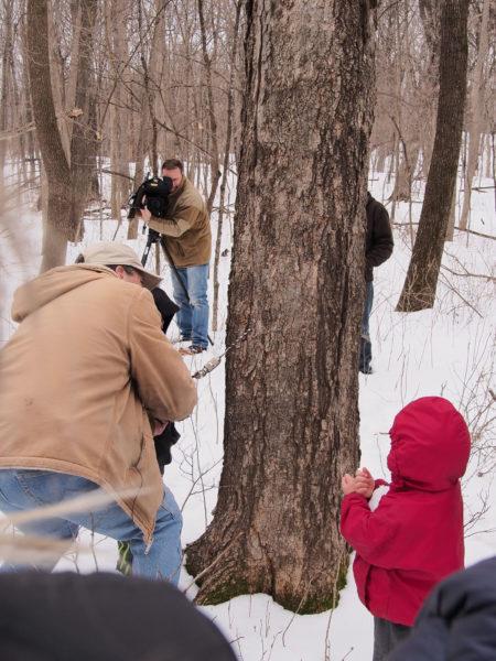 Drilling for sap, Eastman Nature Center