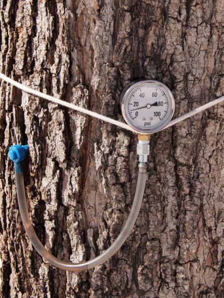 Pressure gauge, Eastman Nature Center
