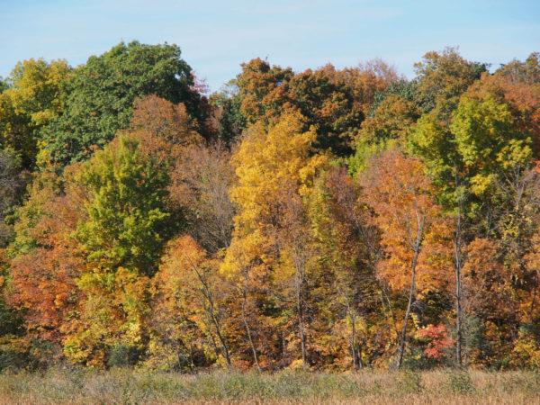Elm Creek Woods, Minnesota