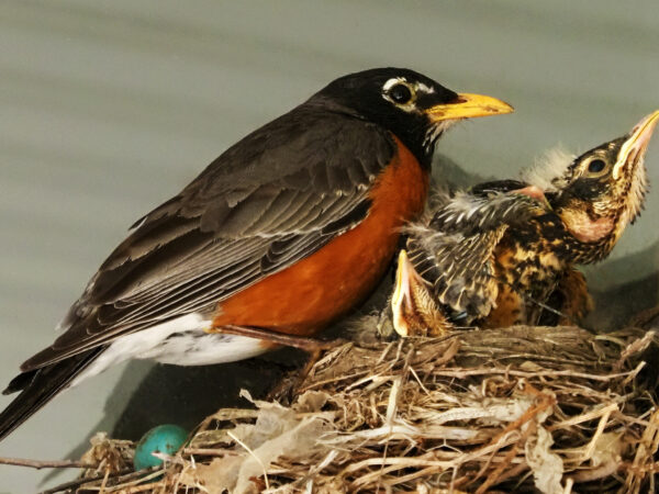 Almost ready to leave the nest