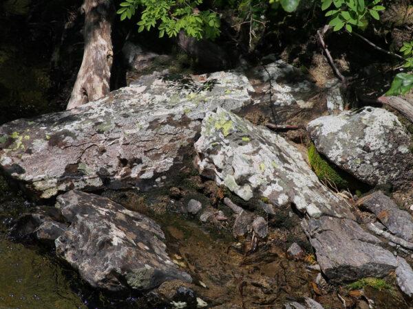 Icicle Creek - Streamside Rock Lichens