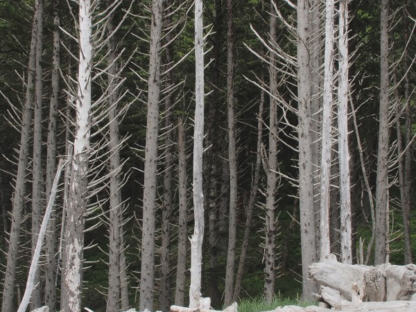 John-Palka-Rialto-Silver-Forest