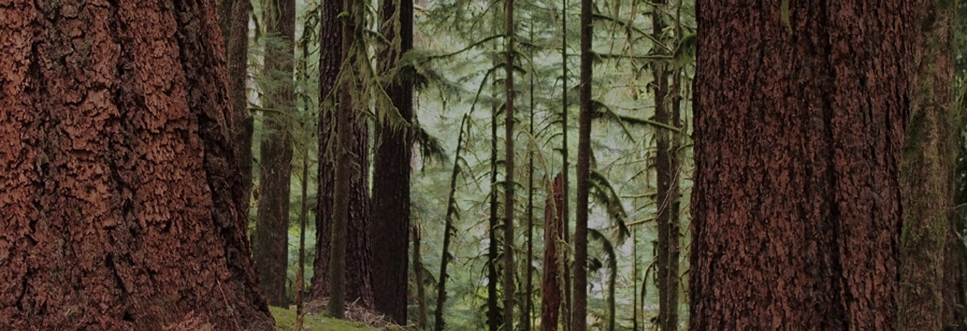 Ancient Forest, Sol Duc Valley - John Palka
