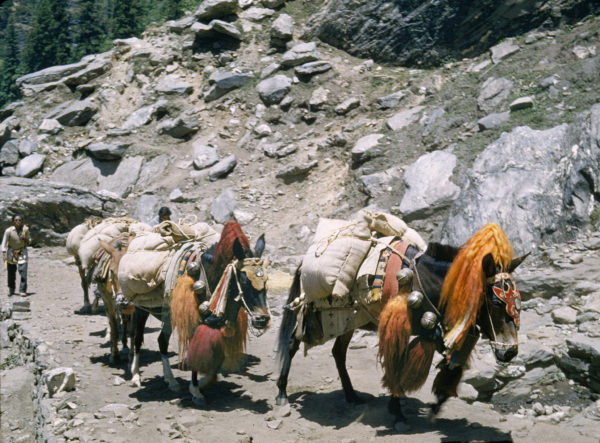 Lahaul Mule Train