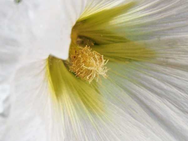 Anthers and stigmas