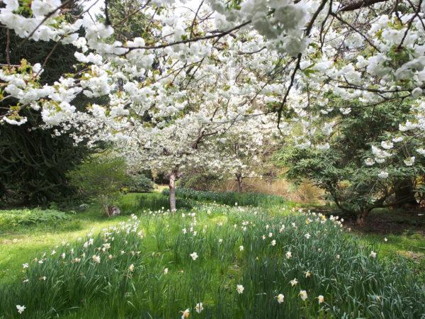 Spring blooms, Meerkerk Gardens, Whidbey Island