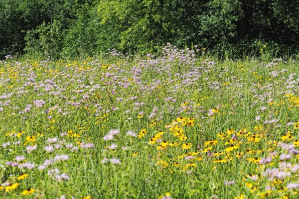 Eastman Prairie in Mid-July