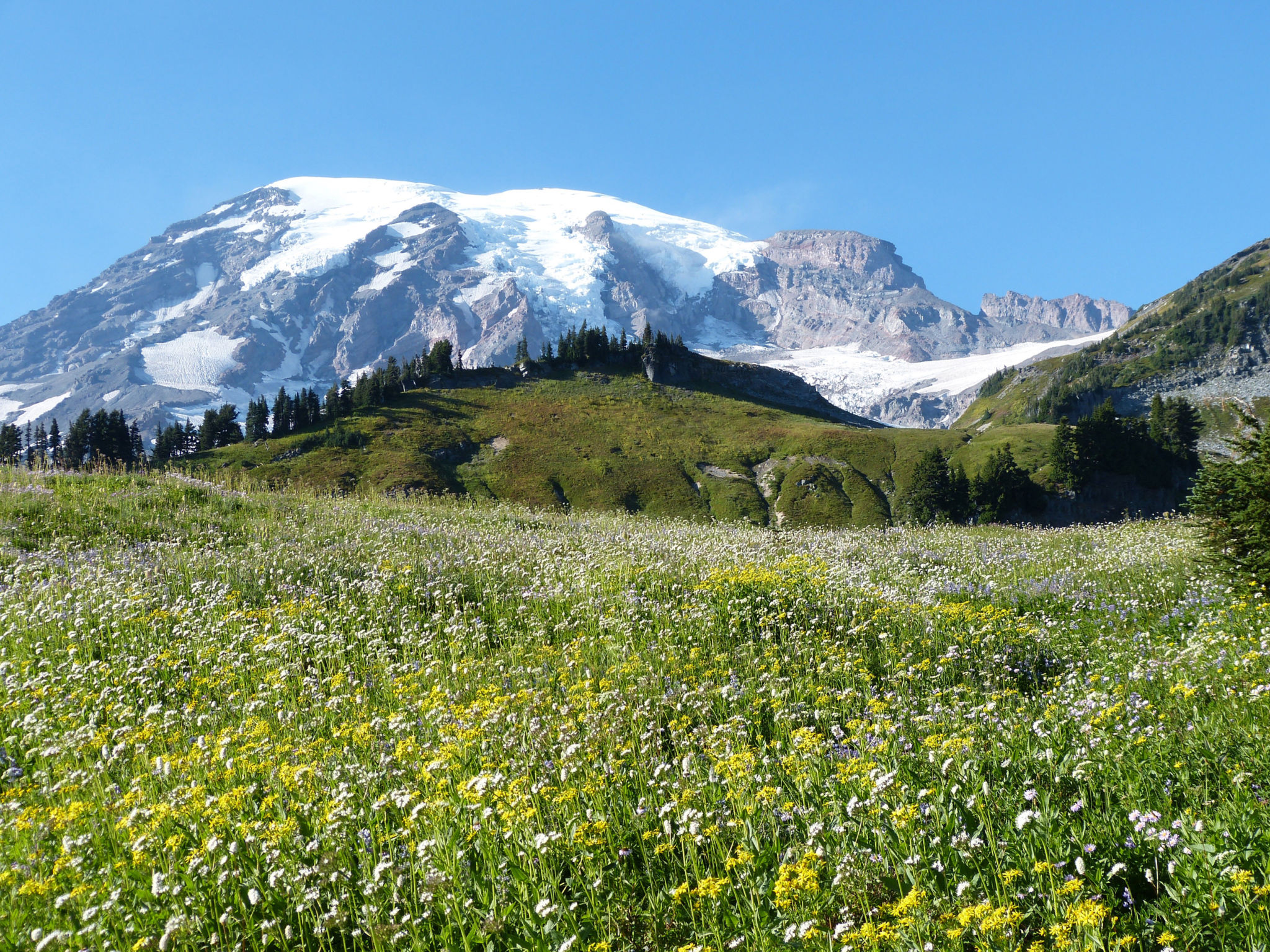 mountain meadow tales � vibrant flowers � nature�s depths