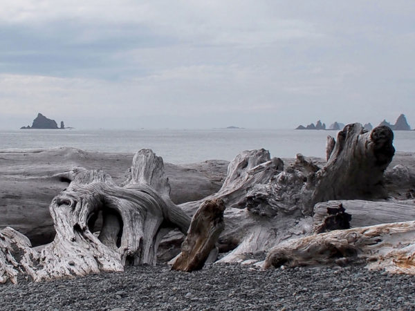 Driftwood on Rialto Beach, Olympic Peninsula