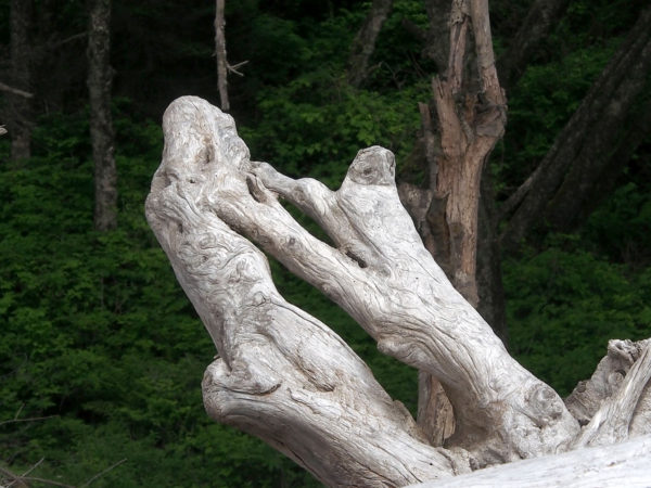 Sculptural self-grafting of roots