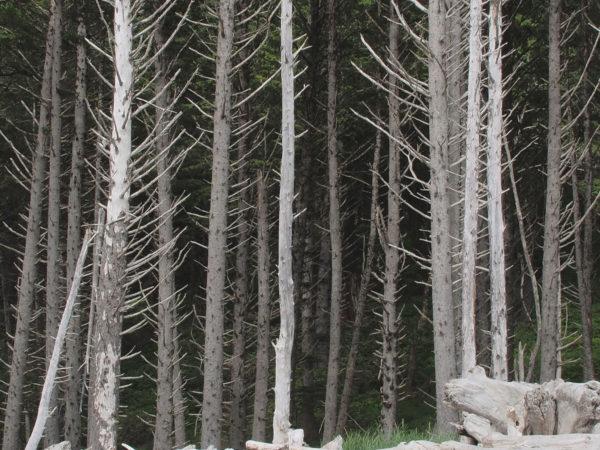 Rialto Silver Forest