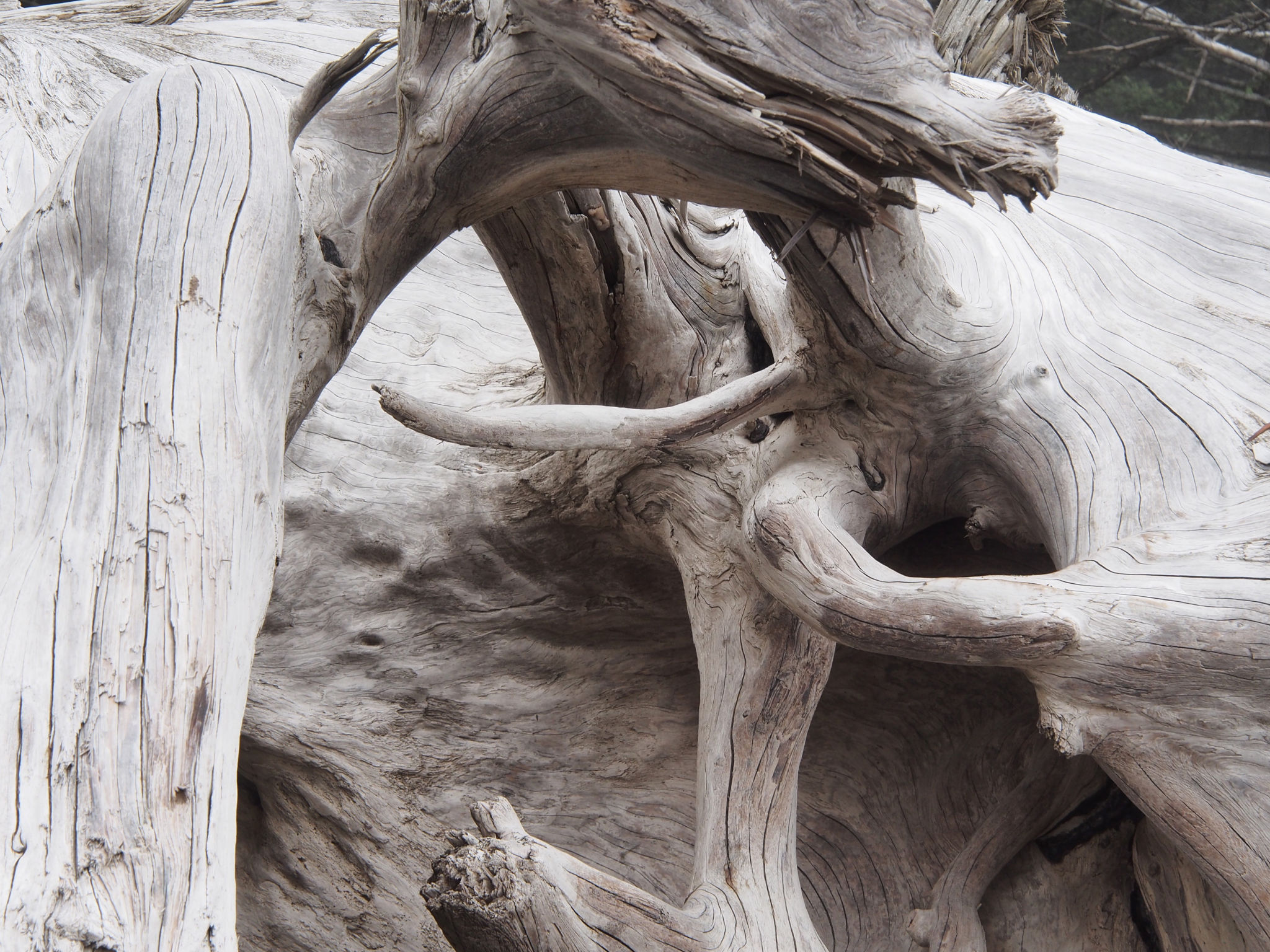 Root lessons from nature s sculpture garden nature s depths Driftwood sculptures for garden